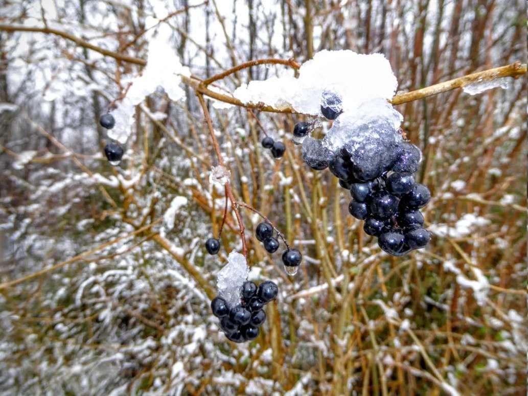 Maudacher Bruch Winter 2016